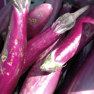 japanese eggplants send green starJapanese Eggplant Plant Care